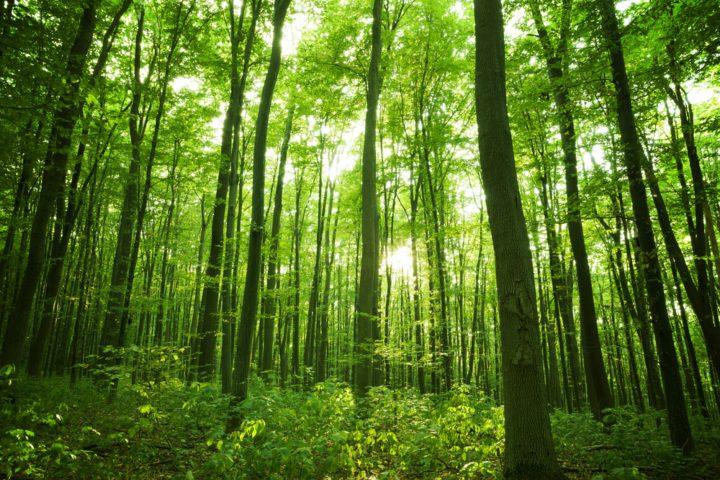 Nuestra vocación forestal