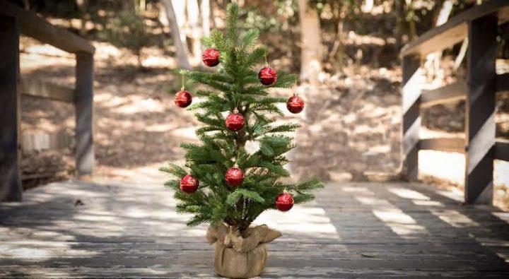 Recicla tú árbol de Navidad