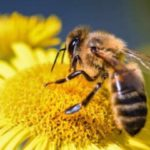 abejas-780x405