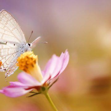 como-atraer-insectos-polinizadores