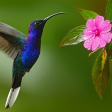 jardin-para-colibries-696x464