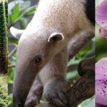 michoacan-biodiversidad