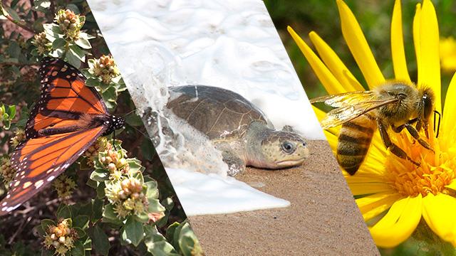 Biodiversidad Michoacana
