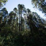 bosque-mich-verdexmi-com