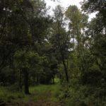 bosque-morelia-1160x700