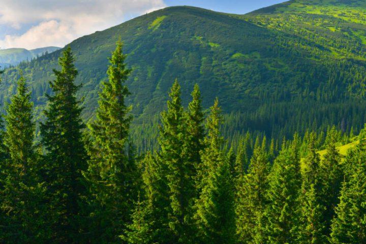 Cuidemos Nuestros Bosques