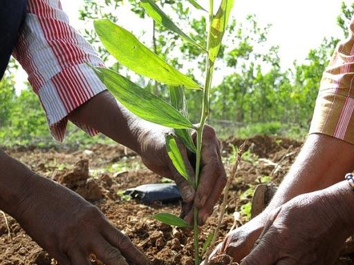 Reforestación Con Jóvenes