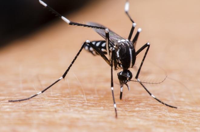 Dengue, ¿Virus o Bacteria?