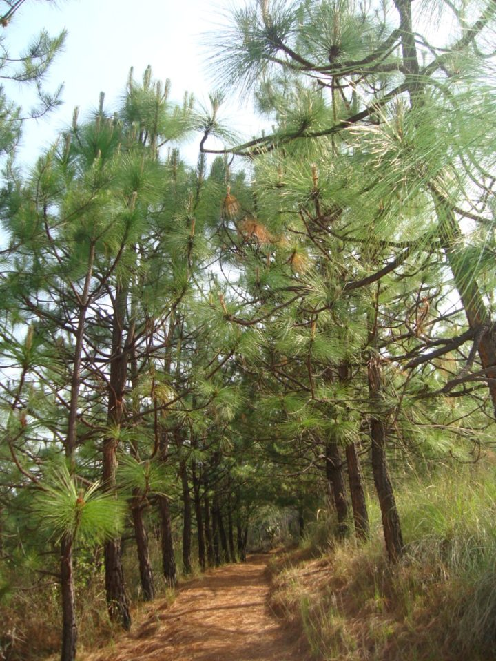 """Parque Estatal """"Cerro Punhuato"""""""