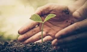 Se cumplen metas en la campaña estatal de reforestación