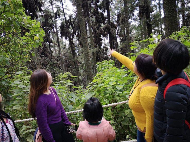 Michoacán, Crecimiento histórico en el sector turismo.