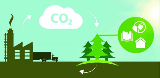 Captura de Carbono Forestal